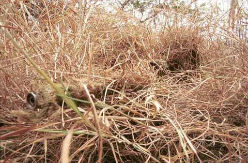 http://www.gajetcamp.in/wp-content/uploads/2012/12/camouflaged-sniper.jpg